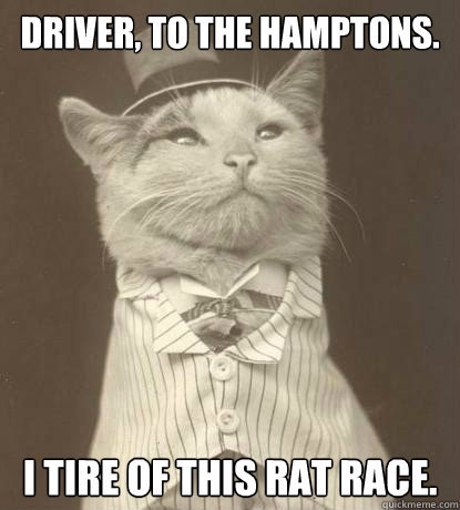 cat rat race